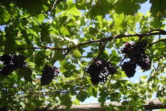 Weinfahrt nach Dettelbach/Sommerach